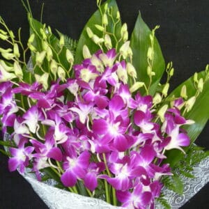 AlohaOrchids